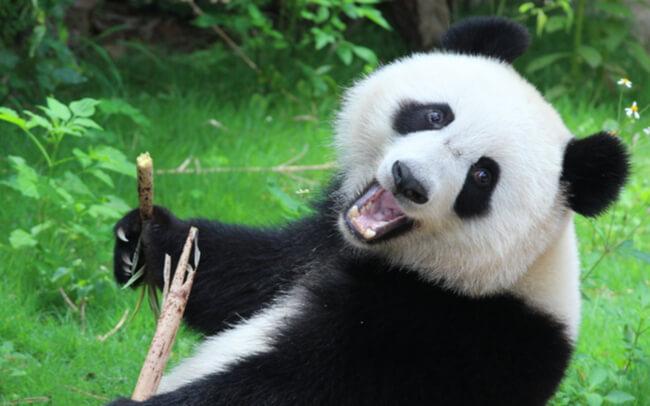 zegarki panda
